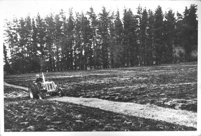 "Ploughing Bottom Paddocks Hexton Farm 1960s  Ploughing the bottom paddocks on the farm. I am guessing mid to early 1960s as those pine trees where chopped down fairly early on in my life. The pines were at the far end of the four flat paddocks of about four acres each. On the other side of them was the creek paddock which we walked up and over to get to ""the other side"" of the farm as we used to call it. (Sorry, for 99.9% of my contacts that description will mean nothing but close family will recognise the description I hope.)  Before I scanned this photo I thought that was my father driving the tractor, but now that I can enlarge it I don't think it is. I can very vaguely remember those pines getting the chop."