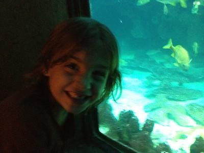 At the New England Aquarium.