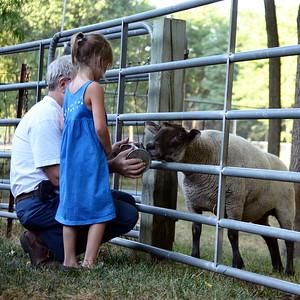 Sheep-feeding time.