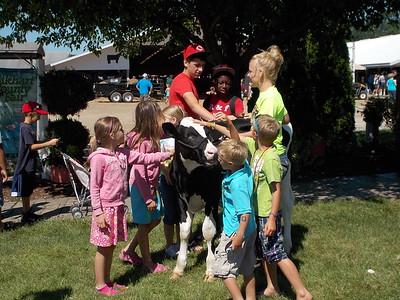 Petting calf.