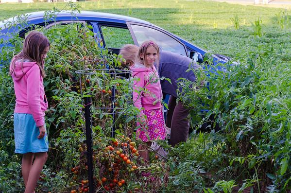 At Steve's garden.