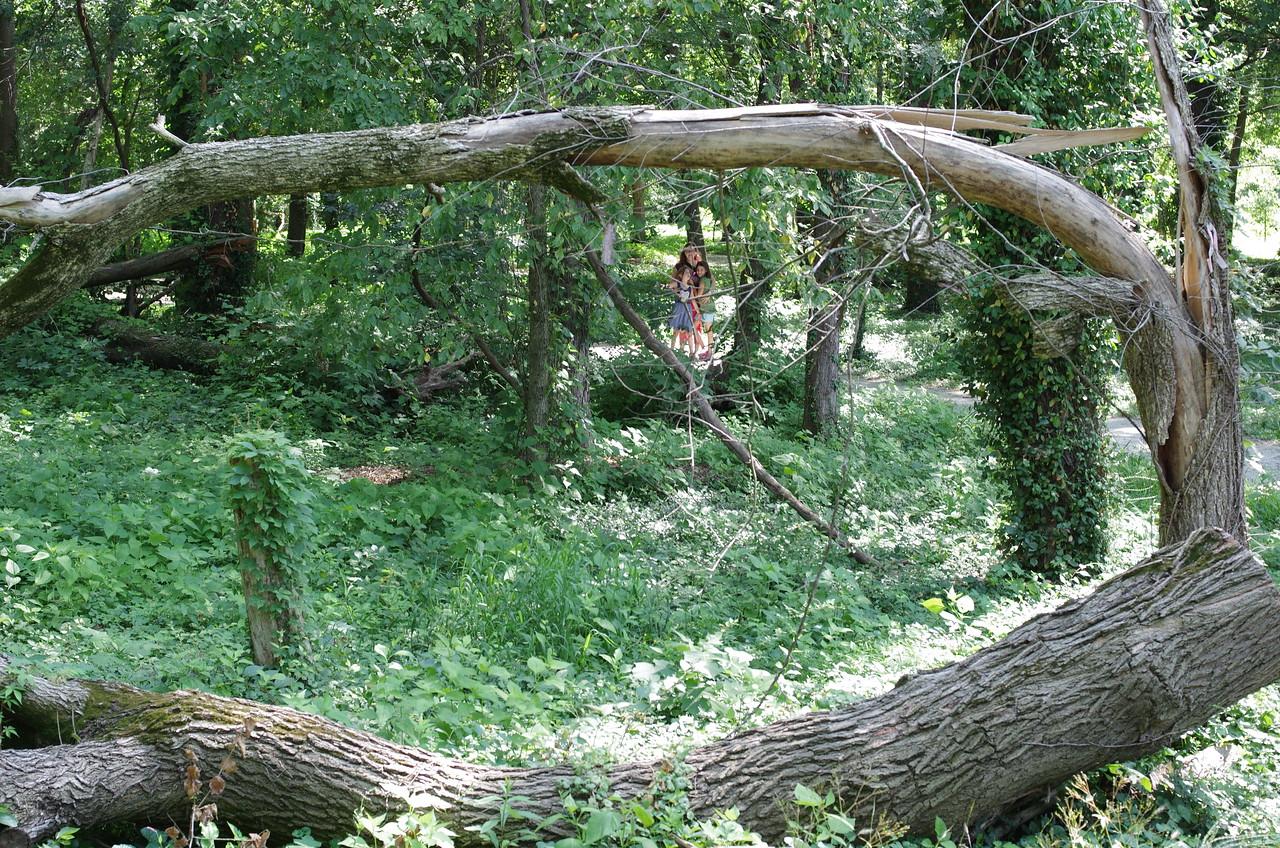 Anya, Karen, and Guen in the woods.