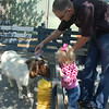 Petting and brushing the goat with daddy