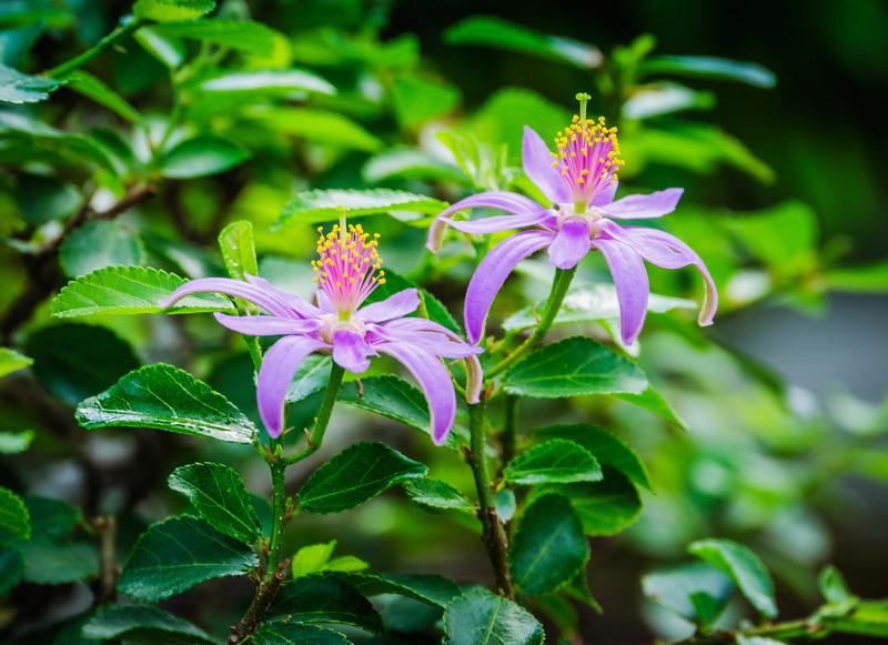20130625-arboretum-082