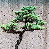 20130625-arboretum-046