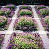 20130625-arboretum-008