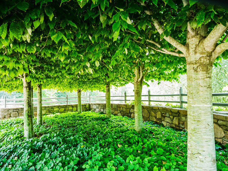 20130625-arboretum-021
