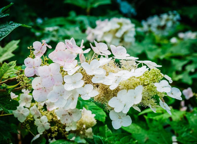 20130625-arboretum-027