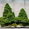 20130625-arboretum-039