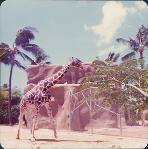 1975_MD_Hawaii0000006A