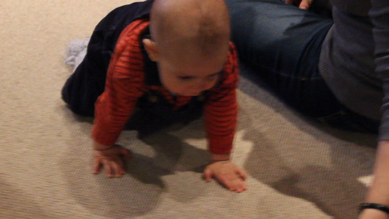 Just learned to crawl