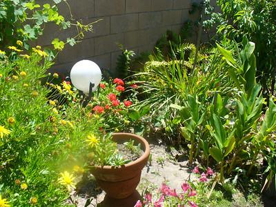 Mom's experimental garden