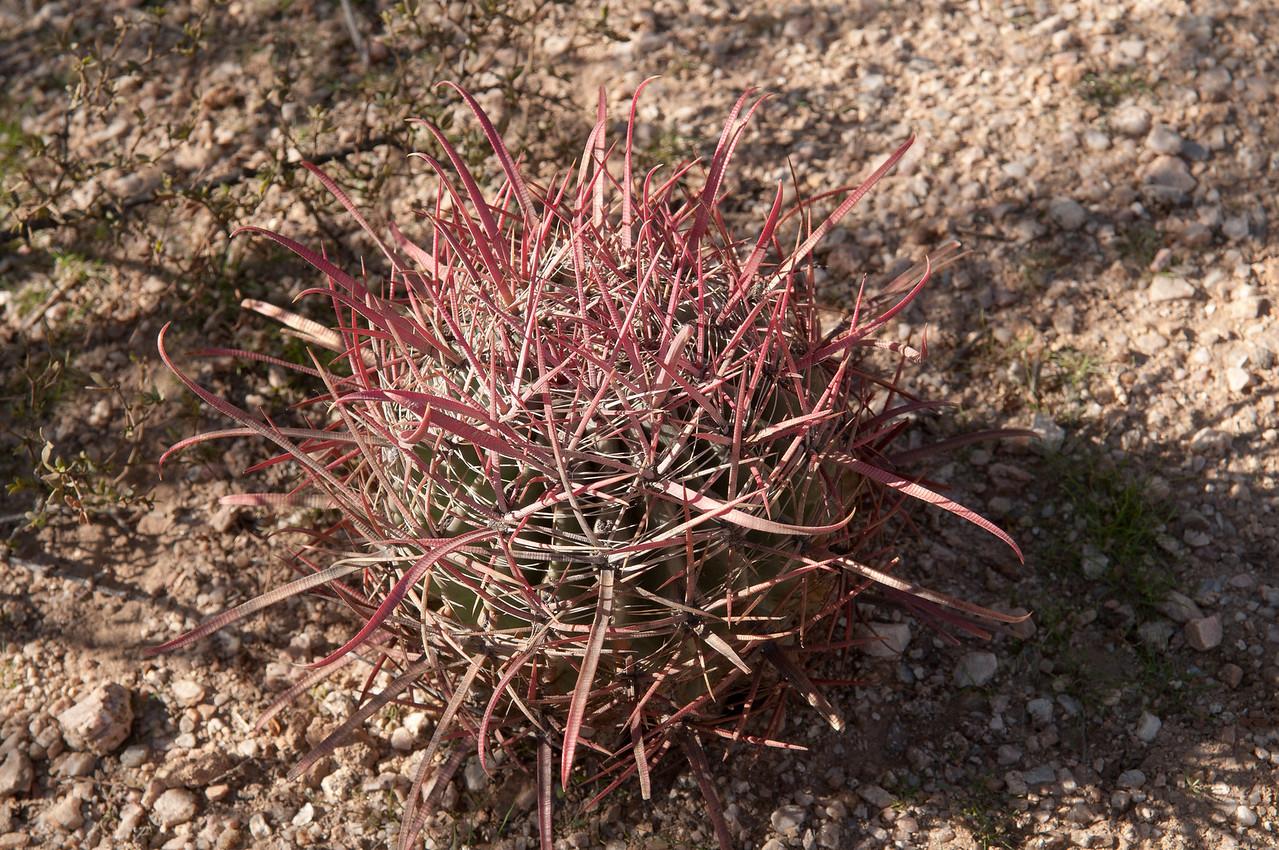 Desert-20110117110529_8896