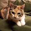 Hello Matilda :)