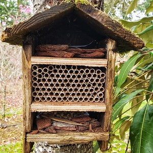 Mason Bees Moving in!
