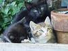 More Kittens!!!!!!!!!!!