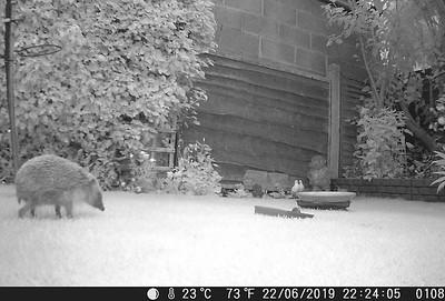 Hedgehog Watch!