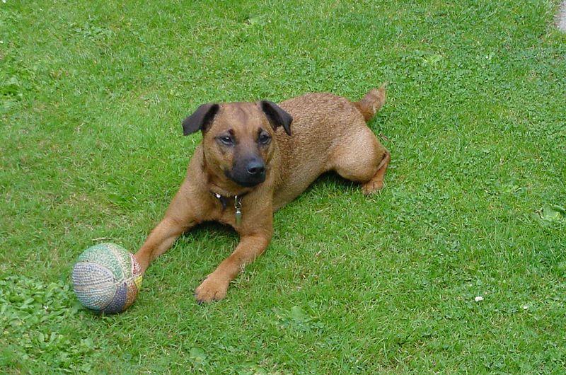 Mum & Dad's new Dog Hetty.