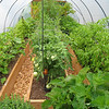 The veggie greenhouse