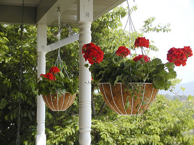 Front Porch baskets of red geraniums and varigated ivy. May 2007