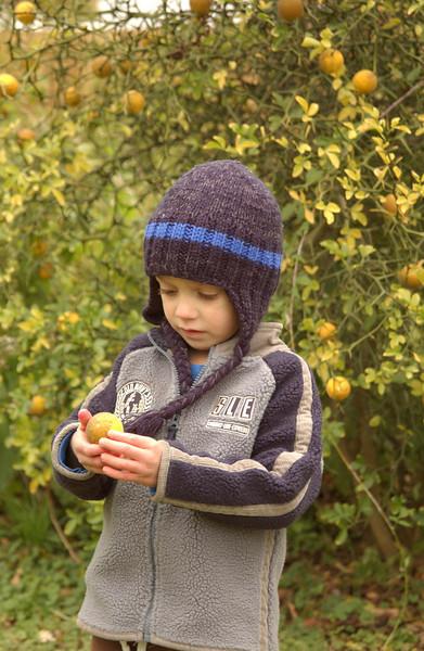 Logan picking ornamental lemons