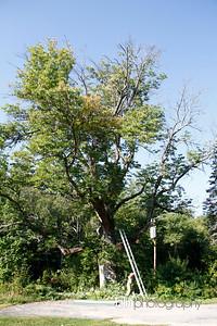 Windy-Row-Treeworks_Ash_Tree_Hancock-9118_09-04-14 - ©BLM Photography 2014