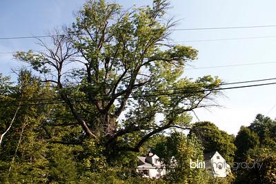 Windy-Row-Treeworks_Ash_Tree_Hancock-9138_09-04-14 - ©BLM Photography 2014