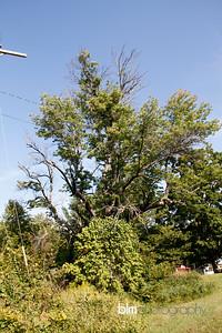 Windy-Row-Treeworks_Ash_Tree_Hancock-9133_09-04-14 - ©BLM Photography 2014