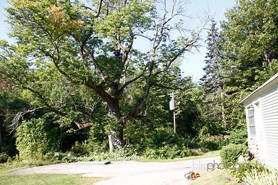 Windy-Row-Treeworks_Ash_Tree_Hancock-9121_09-04-14 - ©BLM Photography 2014