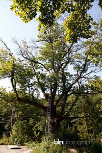 Windy-Row-Treeworks_Ash_Tree_Hancock-9114_09-04-14 - ©BLM Photography 2014