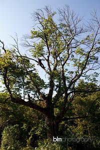 Windy-Row-Treeworks_Ash_Tree_Hancock-9151_09-04-14 - ©BLM Photography 2014