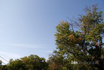 Windy-Row-Treeworks_Ash_Tree_Hancock-9123_09-04-14 - ©BLM Photography 2014