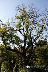 Windy-Row-Treeworks_Ash_Tree_Hancock-9150_09-04-14 - ©BLM Photography 2014