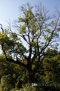Windy-Row-Treeworks_Ash_Tree_Hancock-9152_09-04-14 - ©BLM Photography 2014