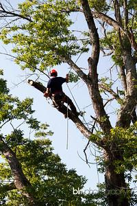 Windy-Row-Treeworks_Ash_Tree_Hancock-9154_09-04-14 - ©BLM Photography 2014