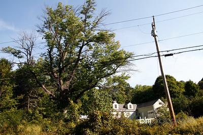 Windy-Row-Treeworks_Ash_Tree_Hancock-9136_09-04-14 - ©BLM Photography 2014