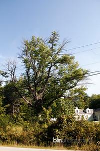 Windy-Row-Treeworks_Ash_Tree_Hancock-9135_09-04-14 - ©BLM Photography 2014