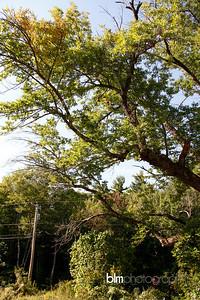 Windy-Row-Treeworks_Ash_Tree_Hancock-9126_09-04-14 - ©BLM Photography 2014