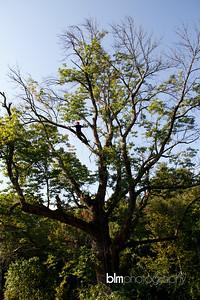 Windy-Row-Treeworks_Ash_Tree_Hancock-9149_09-04-14 - ©BLM Photography 2014