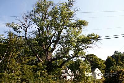 Windy-Row-Treeworks_Ash_Tree_Hancock-9139_09-04-14 - ©BLM Photography 2014