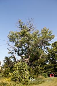 Windy-Row-Treeworks_Ash_Tree_Hancock-9132_09-04-14 - ©BLM Photography 2014