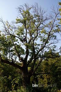 Windy-Row-Treeworks_Ash_Tree_Hancock-9145_09-04-14 - ©BLM Photography 2014