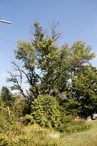 Windy-Row-Treeworks_Ash_Tree_Hancock-9134_09-04-14 - ©BLM Photography 2014