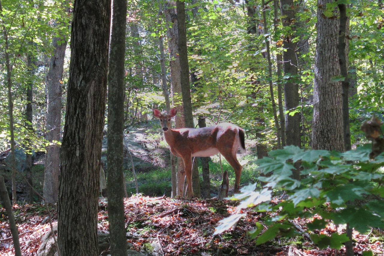 Katelyn had a birthday party at Teatown on Sunday, and Grandma and Kathy went for a hike.  The little doe posed for us.