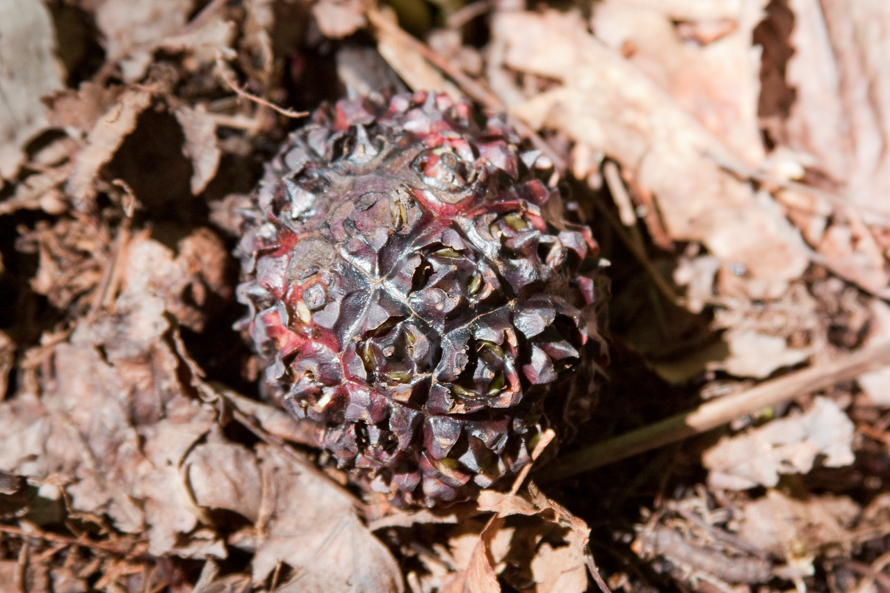 There were several of these things in the woods.  We didn't know what they were, and still don't.