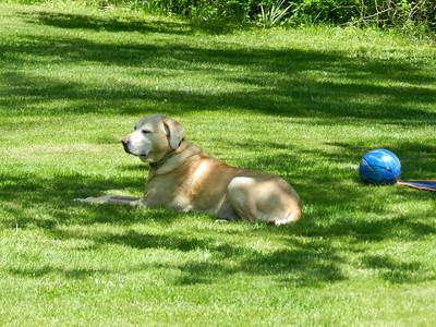 Libby enjoying her yard