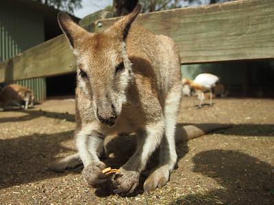 Australia/New Zealand 2012