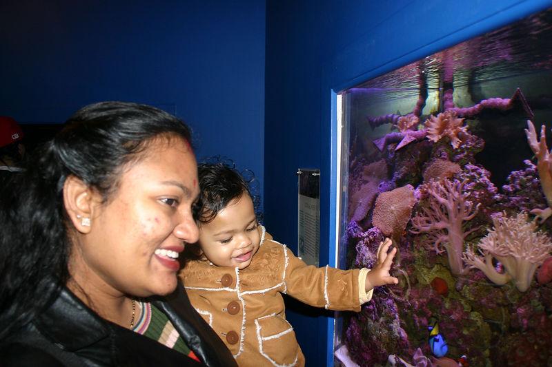 Aquarium in Downtowm