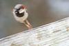 birds at home-0819