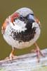 birds at home-0826